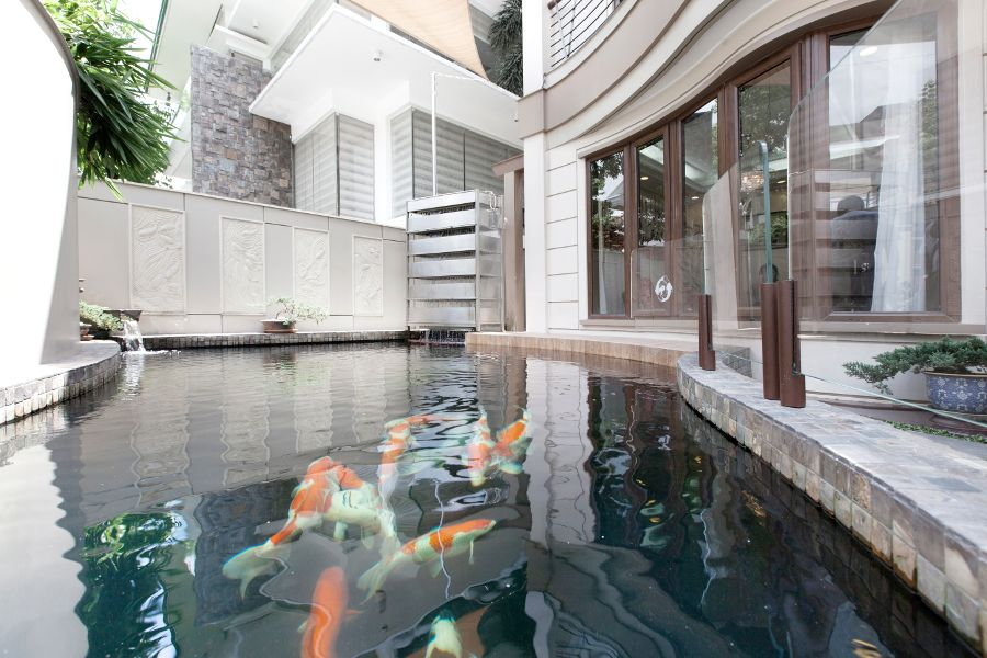 A Short History Of And Five Principles For Designing Koi Ponds Bluprint